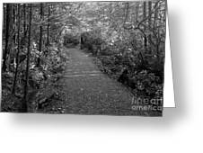 Through The Forest Canopy Black And White Greeting Card