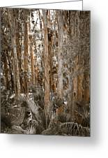 Through The Forest Trees Greeting Card