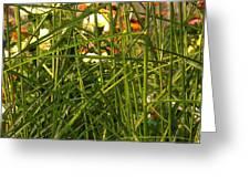 Through The Grass Curtain Greeting Card