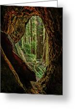 Through The Knothole Greeting Card