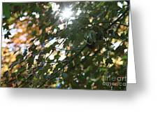 Through The Leaves 2 Greeting Card