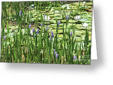 Through The Lily Pond Greeting Card