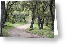 Through The Oaks Greeting Card