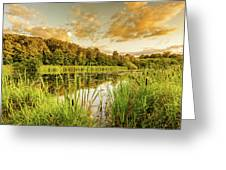 Through The Reeds Greeting Card by Nick Bywater