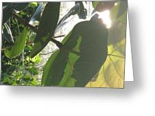 Through The Sea Grape Leaves Greeting Card