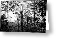 Through The Spring Forest Greeting Card