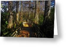 Through The Swamp Greeting Card