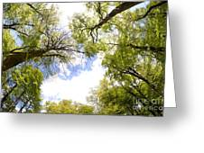 Through The Tree Tops Greeting Card