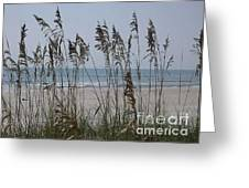 Thru The Sea Oats Greeting Card