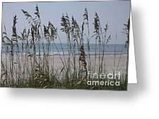 Thru The Sea Oats Greeting Card