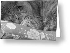 Thumbody Sleeping Greeting Card