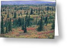 Tiaga Fall Colors, Tundra And Spruce Greeting Card