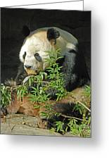 Tian Tian Hanging Out In Panda Man Cave Greeting Card