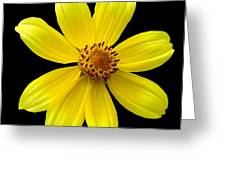 Tickseed Sunflower Greeting Card