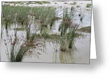Tidal Pool 1 Greeting Card