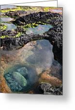 Tidal Pool Greeting Card