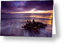 Tide Driven Greeting Card