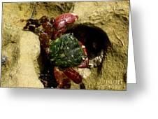 Tide Pool Crab 2 Greeting Card