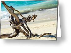 Tied In Knots Greeting Card