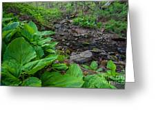 Tierney Springtime - New England Forest Greeting Card
