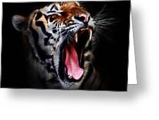 Tiger 10 Greeting Card