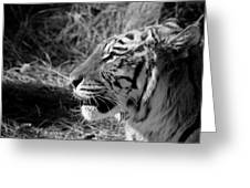 Tiger 2 Bw Greeting Card