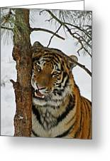 Tiger 3 Greeting Card by Ernie Echols