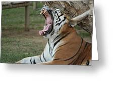 Tiger After Lunch Greeting Card