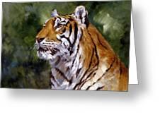 Tiger Alert Greeting Card