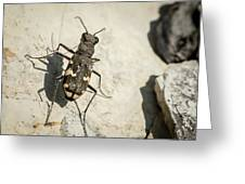 Tiger Beetle Looking For Prey On A Stone Greeting Card