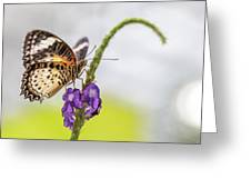 Tiger Butterfly Perched On A Flower Greeting Card
