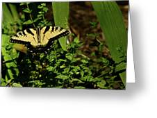 Tiger Butterfly Posing Greeting Card