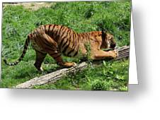 Tiger Clawed Greeting Card
