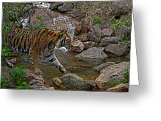 Tiger Crossing Poster Greeting Card