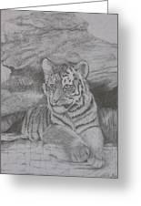 Tiger Cub 2 Greeting Card