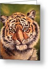 Tiger Cub Greeting Card
