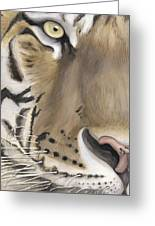 Tiger Face Greeting Card