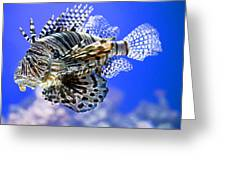 Tiger Fish Greeting Card