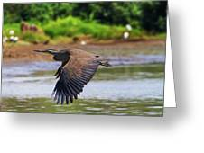 Tiger Heron Greeting Card