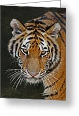 Tiger Hunting Greeting Card