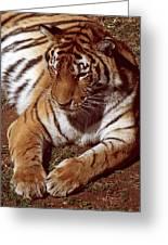 Tiger I Greeting Card