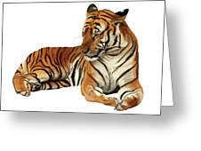 Tiger In Repose Greeting Card