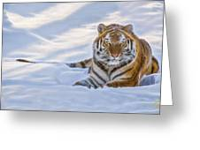 Tiger In The Snow Greeting Card