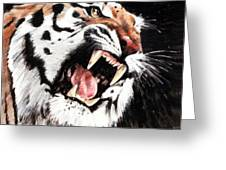 Tiger Greeting Card