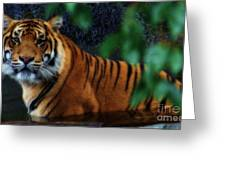 Tiger Land Greeting Card