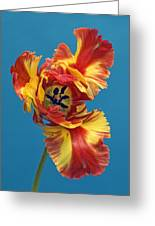 Tiger Lily 1 Greeting Card