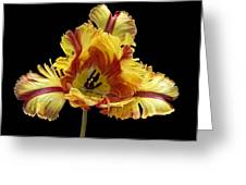 Tiger Lily 3 Greeting Card