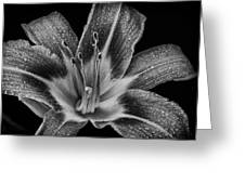 Tiger Lily - Black And White Greeting Card