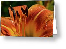 Tiger Lily Greeting Card