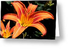 Tiger Lily In Full Sun Greeting Card